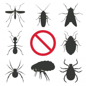 Pest Control Service in Dhaka, Pesticides Company in Bangladesh, Cleaner Company in Bangladesh